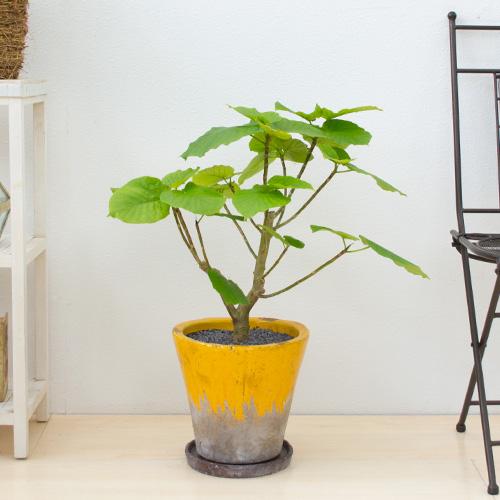 観葉植物Ricochet Petitのインテリアとしても使えるおしゃれなグリーン